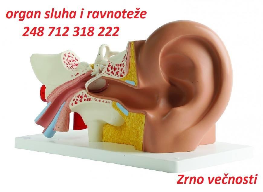 36850619_1992709797706402_2706278014404001792_n